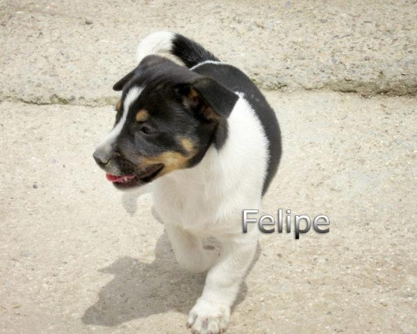 Felipe-(6)