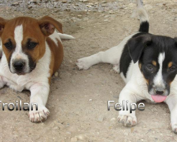 Felipe-(8)