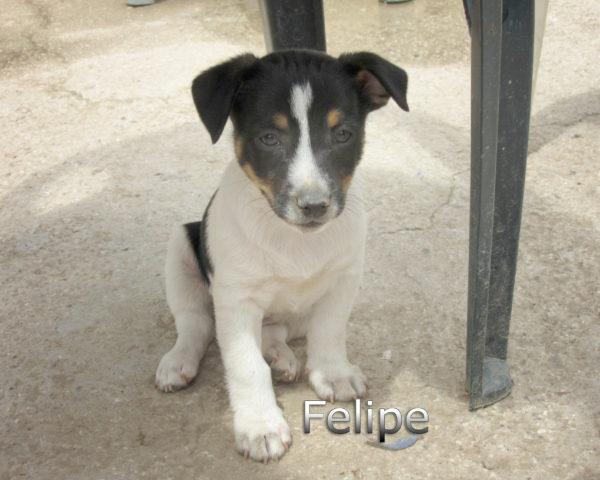 Felipe-(9)