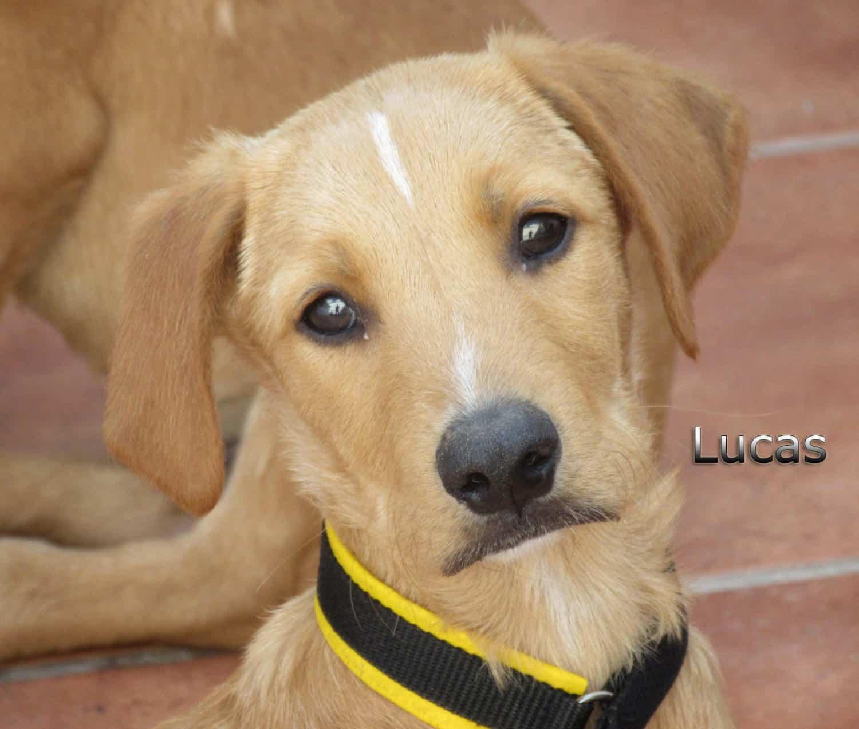 Lucas-(5)