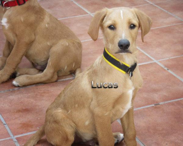 Lucas-(6)