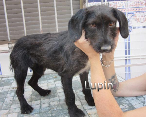 Lupin-(3)