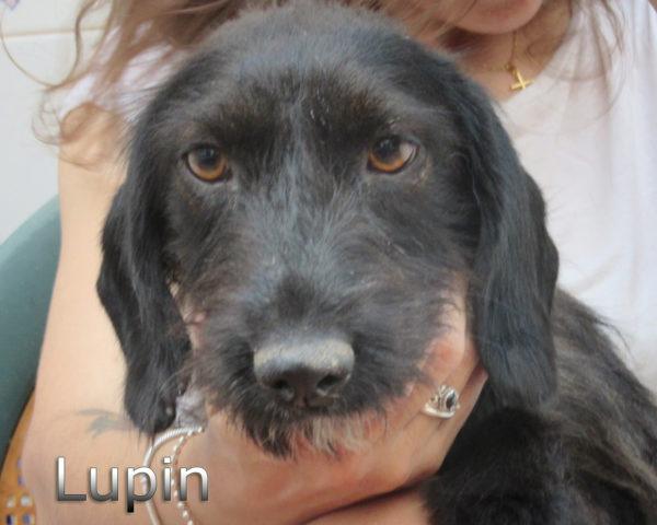 Lupin-(4)