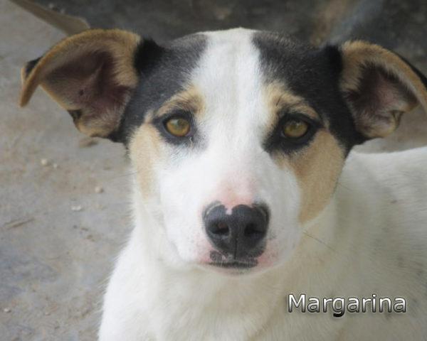 Margarina-(4)