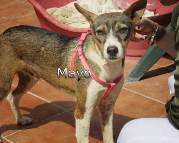Mayo-(10)