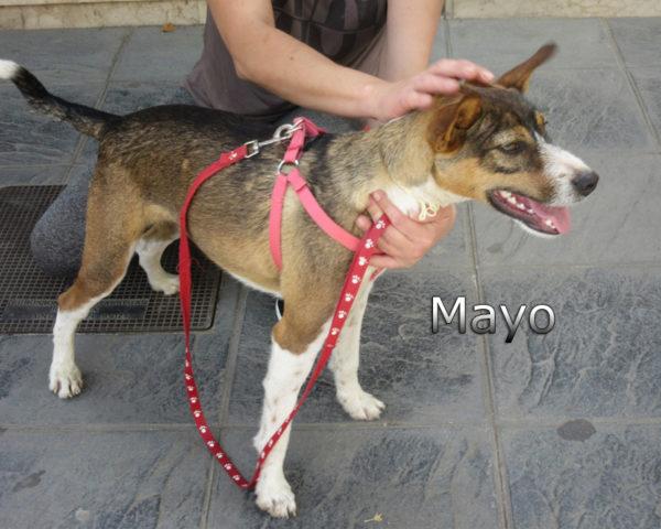 Mayo-(12)