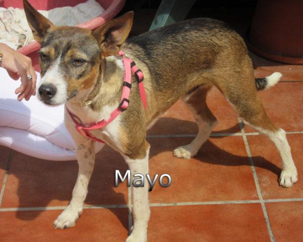 Mayo-(7)