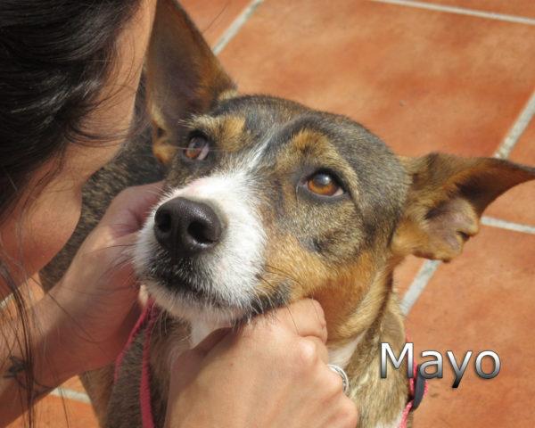 Mayo-(9)