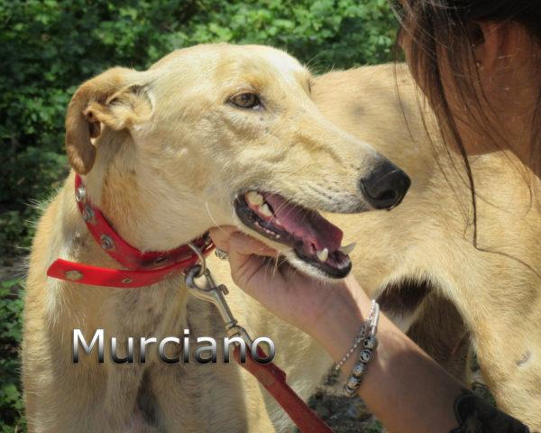 Murciano-(7)