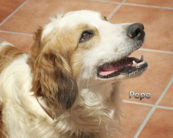 Pepe-(4)