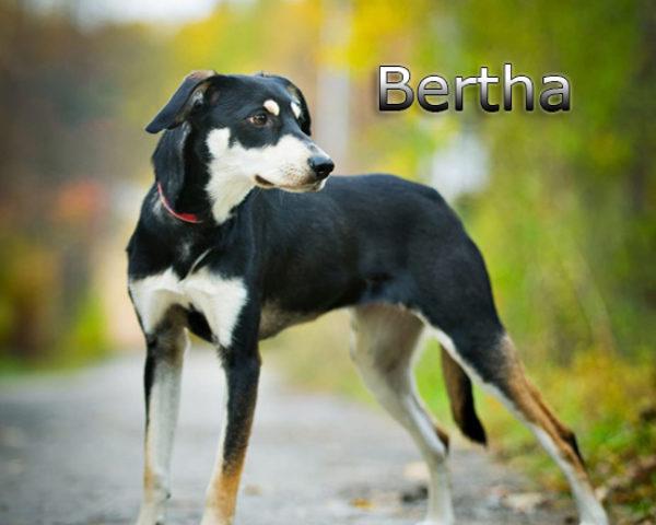 Bertha11b