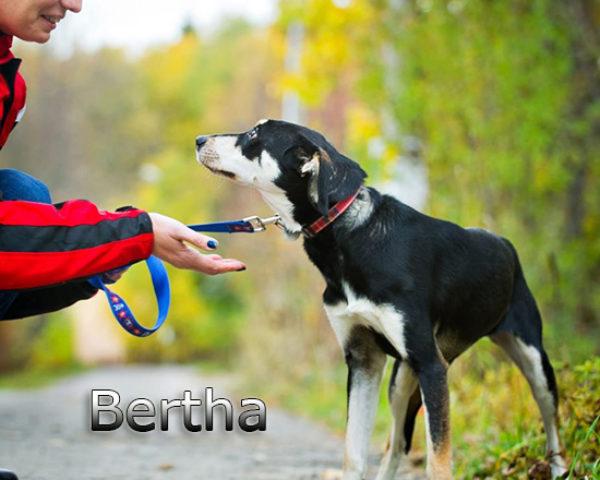 Bertha1b