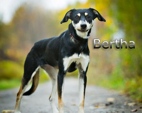 Bertha2b