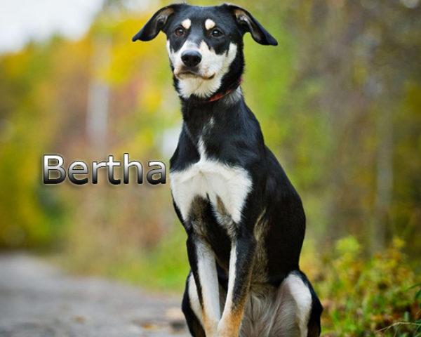 Bertha4b