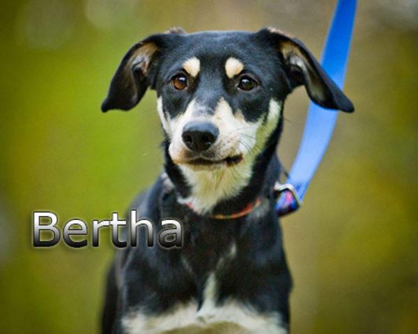 Bertha7b
