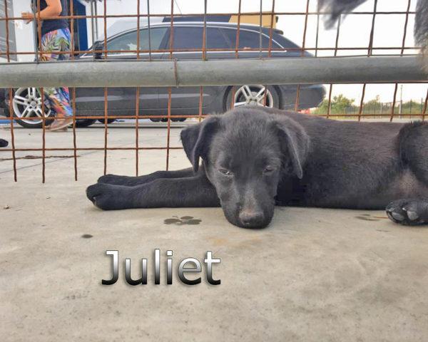 Juliet3