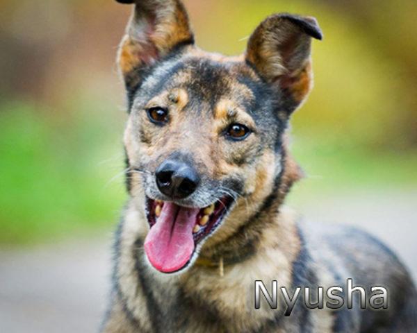 Nyusha11w