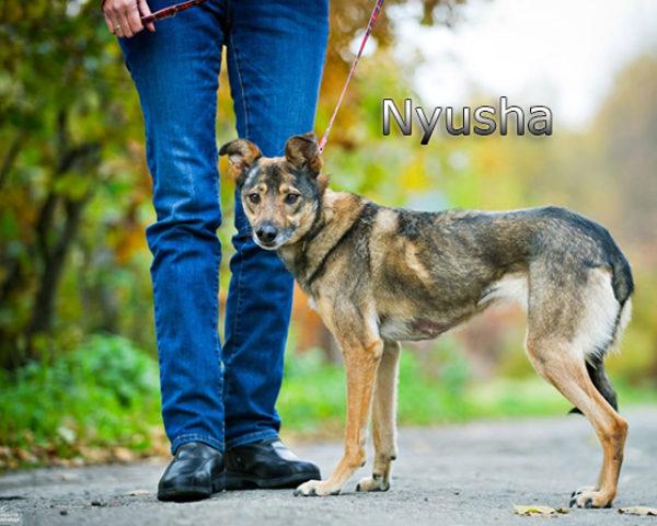 Nyusha15w