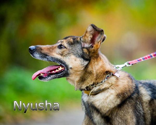 Nyusha2w