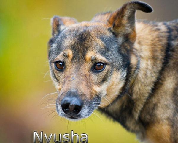 Nyusha5w