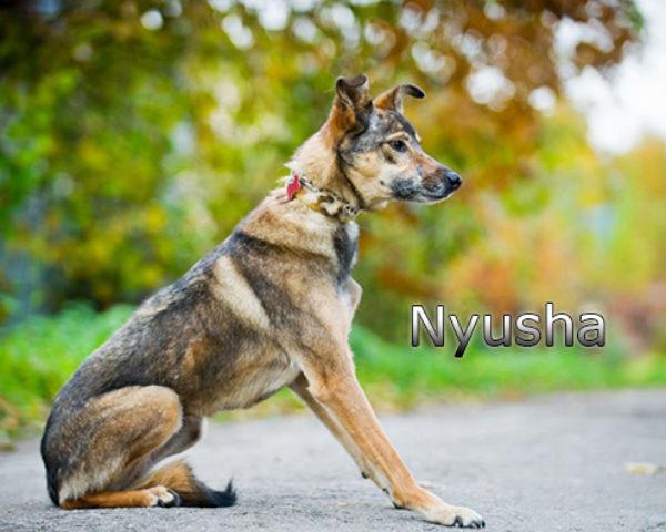 Nyusha7w