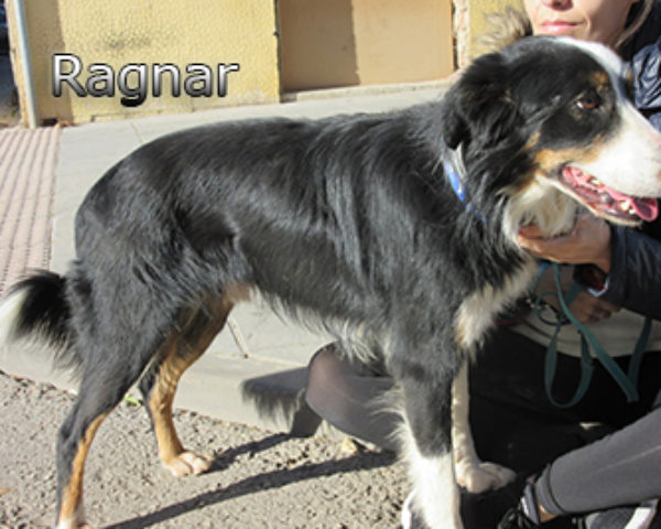 Ragnar-(4)web