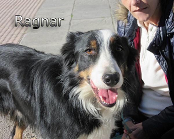 Ragnar-(7)web