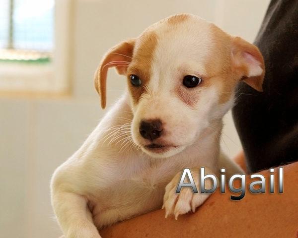 ABIGAIL-001