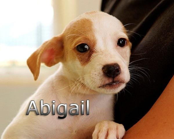 ABIGAIL-003