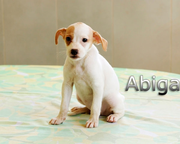 ABIGAIL-004