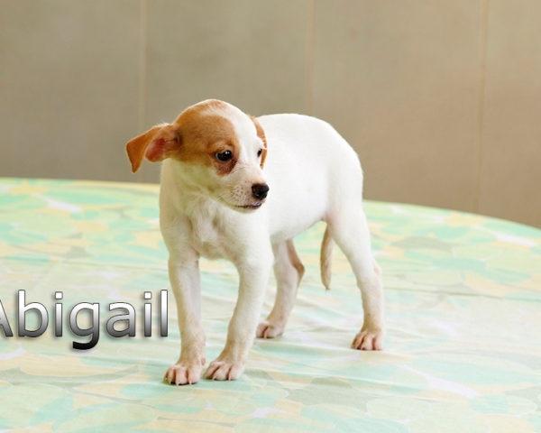 ABIGAIL-005