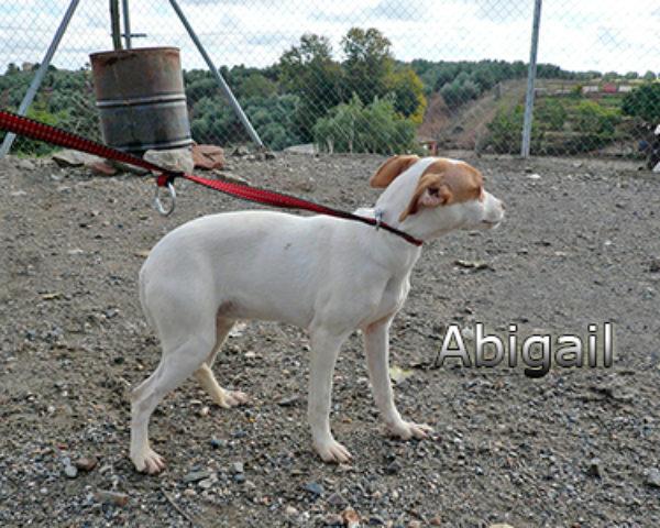 Abigailweb