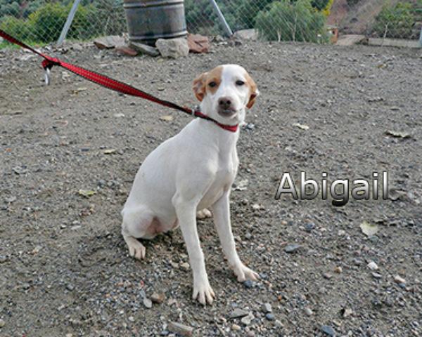 Abigailweb(1)