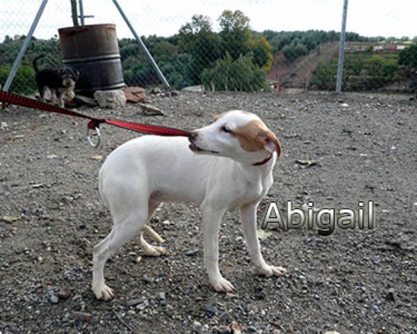 Abigailweb(2)