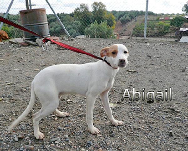 Abigailweb(3)