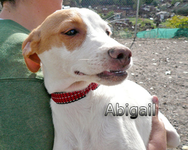 Abigailweb(4)