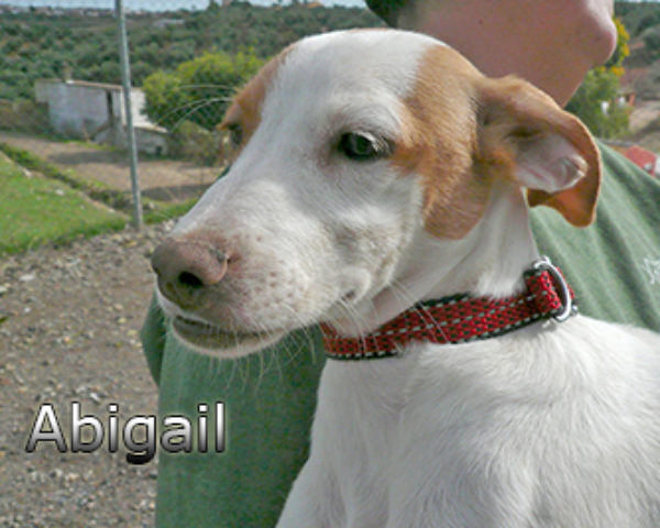 Abigailweb(5)