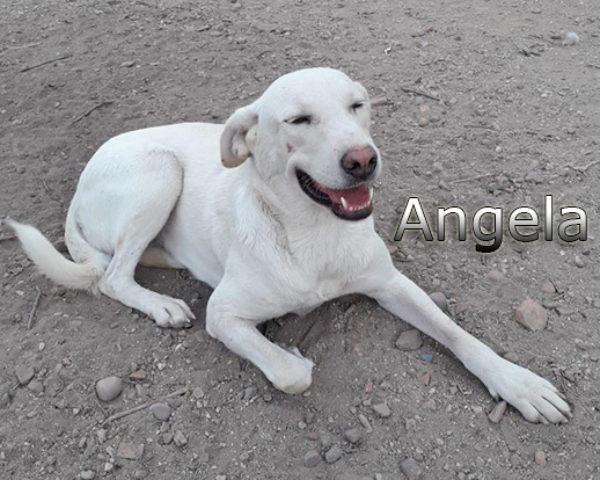 Angela-(1)web