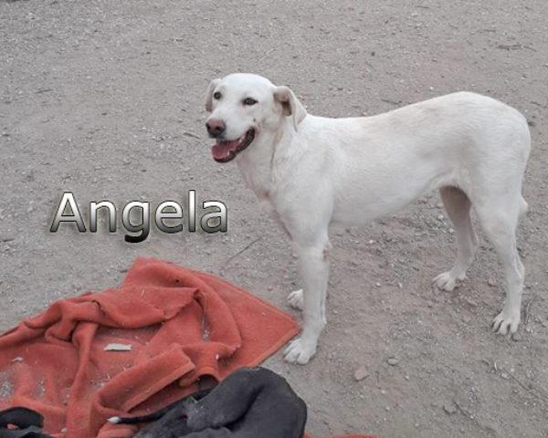 Angela-(2)web
