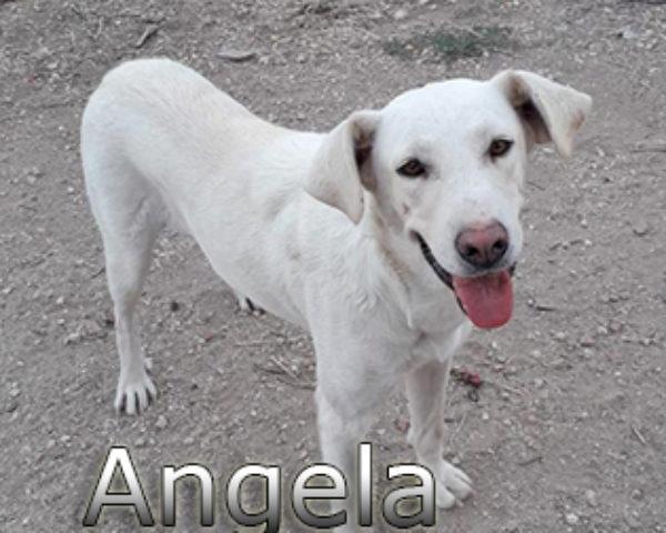 Angela-(6)web