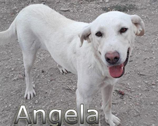 Angela-(7)web