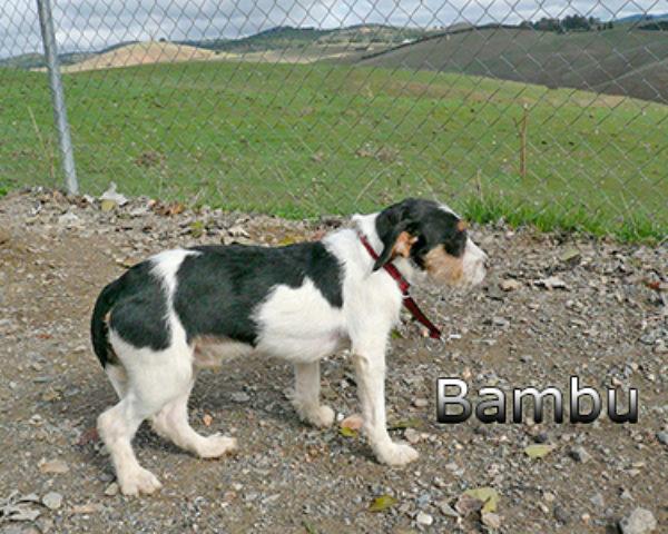 BAMBUweb