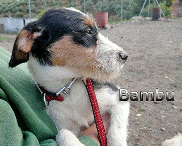 BAMBu-011web