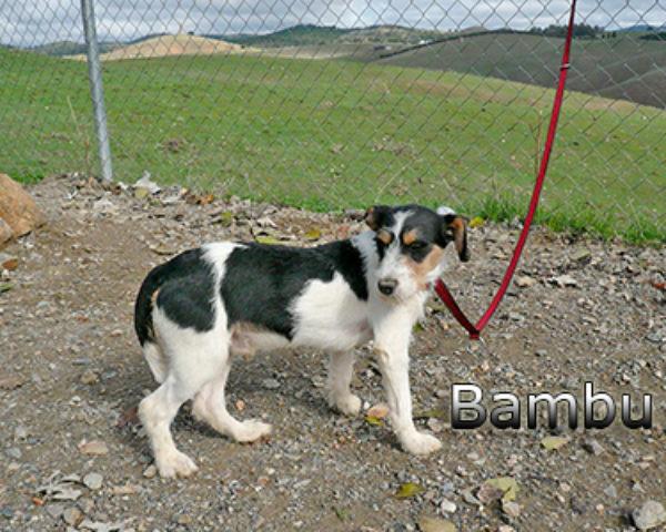 BAMBu-013web