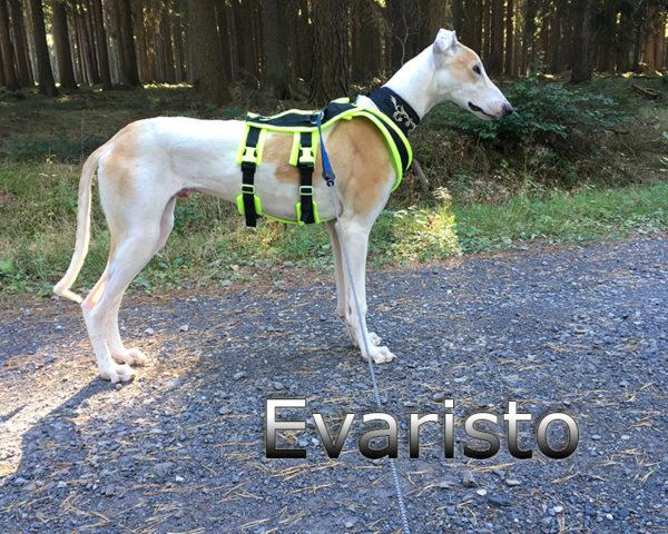 Evaristo (1)