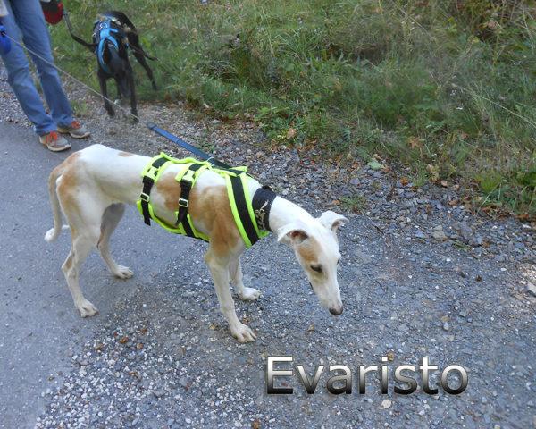 Evaristo (2)