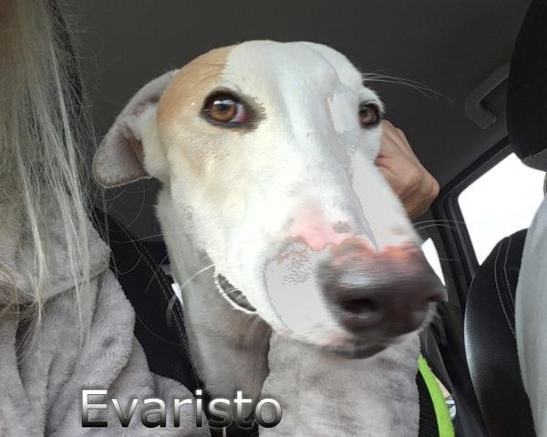 Evaristo (3)