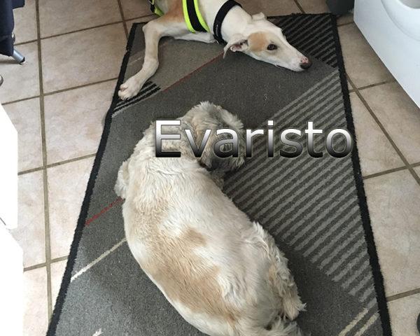 Evaristo (5)