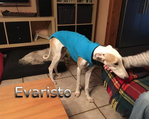 Evaristo (6)