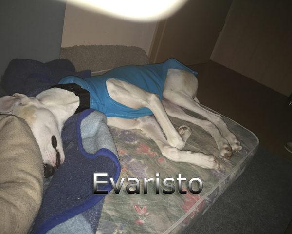 Evaristo (7)